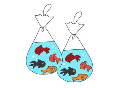 8匹の金魚